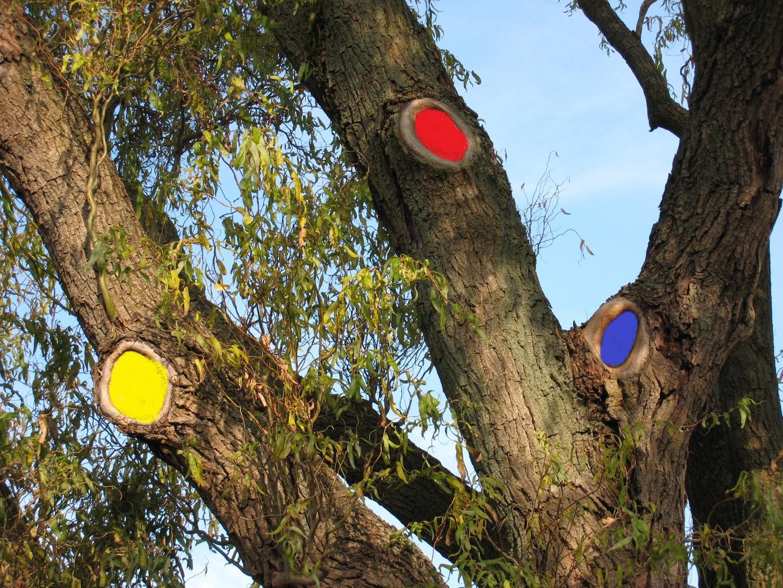 Dreiäugiger Baum
