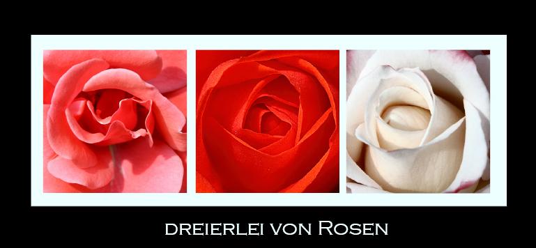 Dreierlei von Rosen