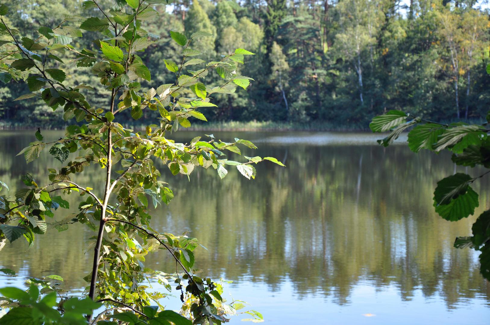 Dreisee in Brandenburg 3