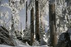 Dreisesselberg Winterimpression