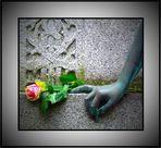 Dresden Tolkewitz - Rose