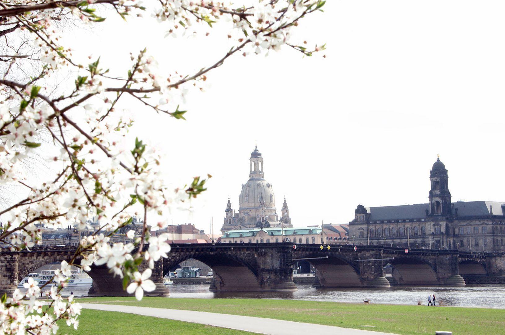 Dresdener Altstadt im Frühling 2012