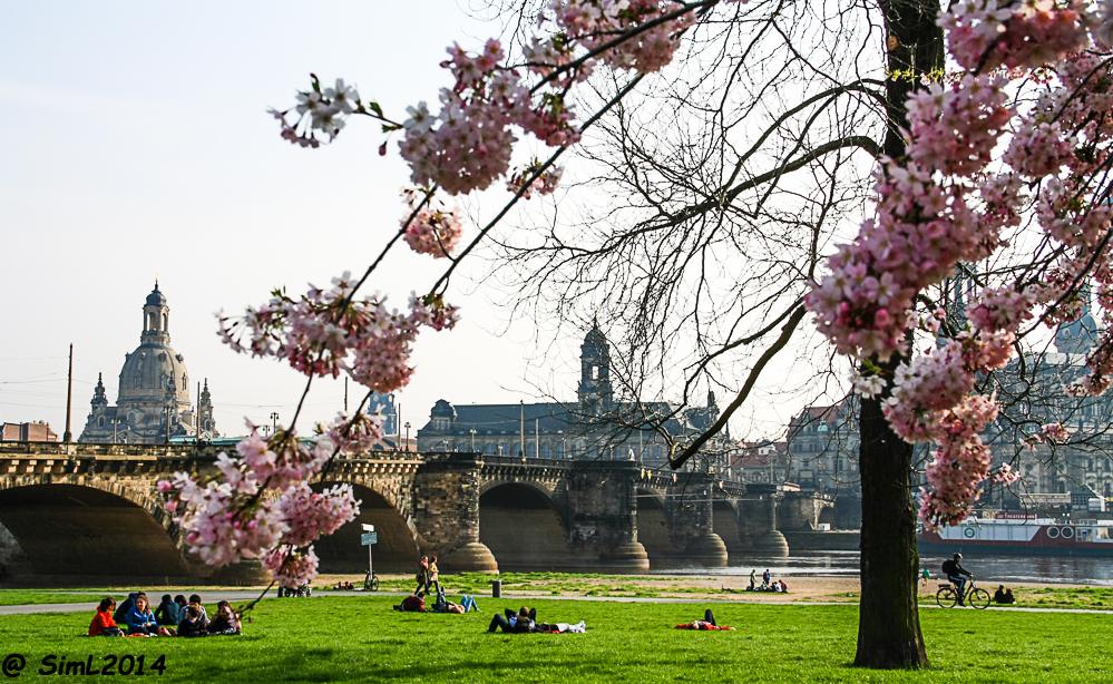 Dresdner Frühling