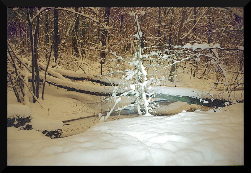 Dresdner Heide in einer Winternacht