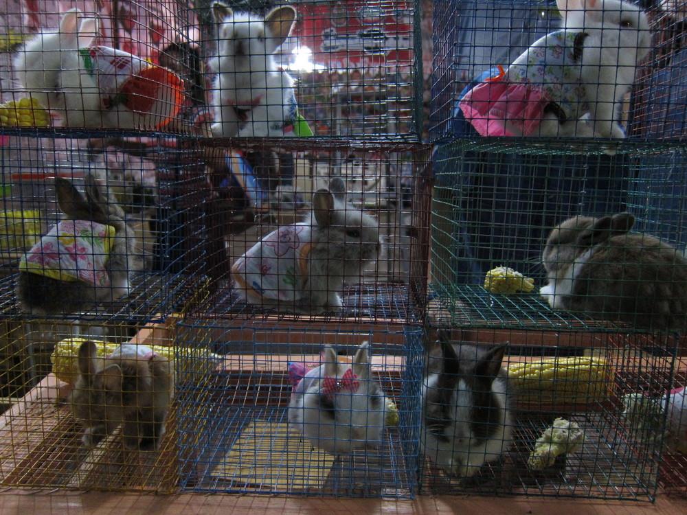 dressed up bunnys