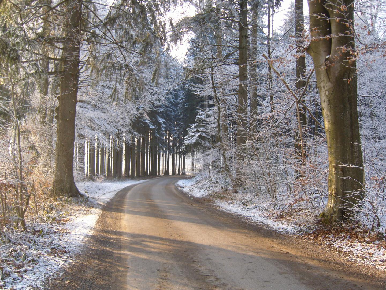 drève d'hiver
