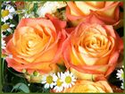 DRI - Test Blumen bei Tageslicht.