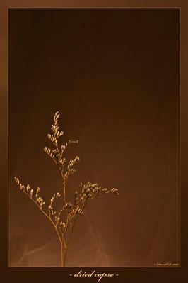 dried copse