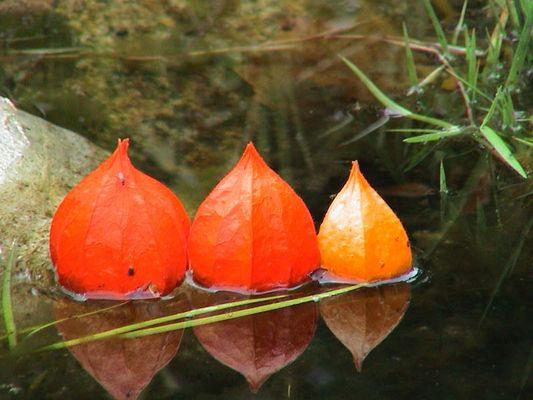 Drillinge im Teich