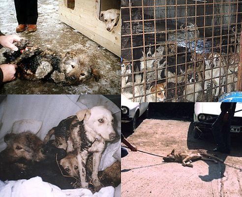 Dringende Hilfe für leidende Hunde in Rumänien !!!