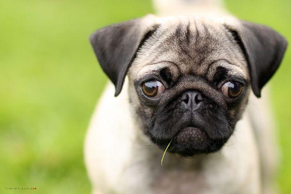 Drogenhund....