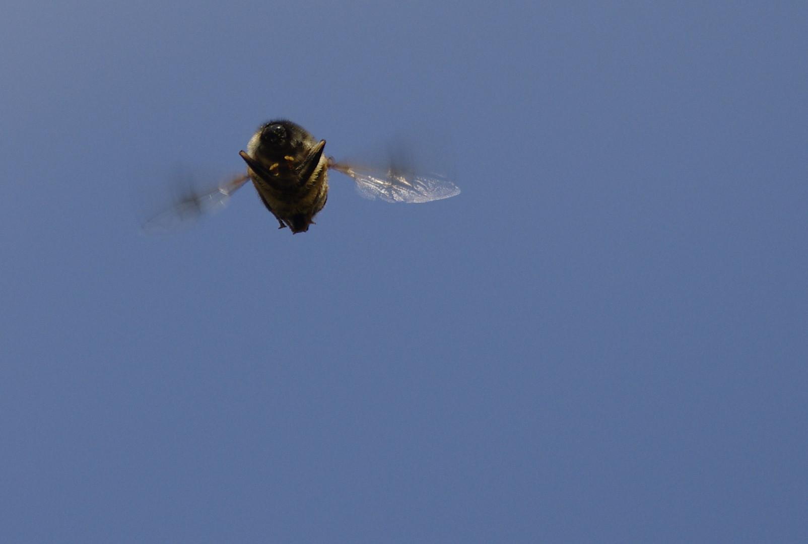 Drohneflug