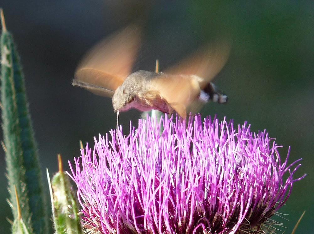 Drôle de papillon