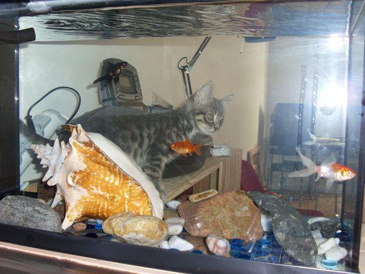 Drôle de poisson !!