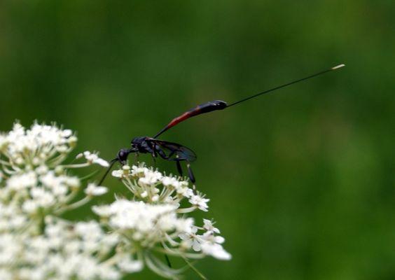 Drole d'insecte !!!!!