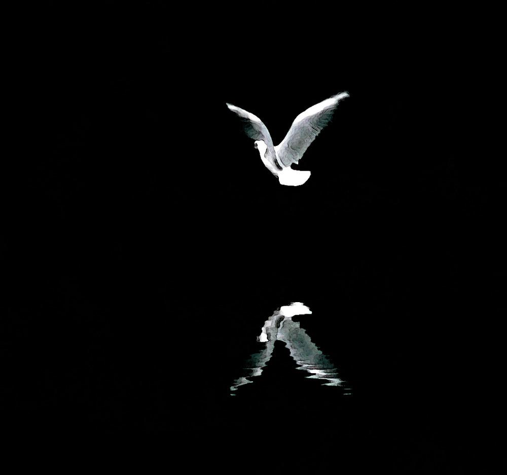 drole d'oiseau