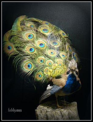 drole d'oiseau..............