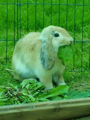 Drolliges     - der Monat von Kaninchen und Schafen :)