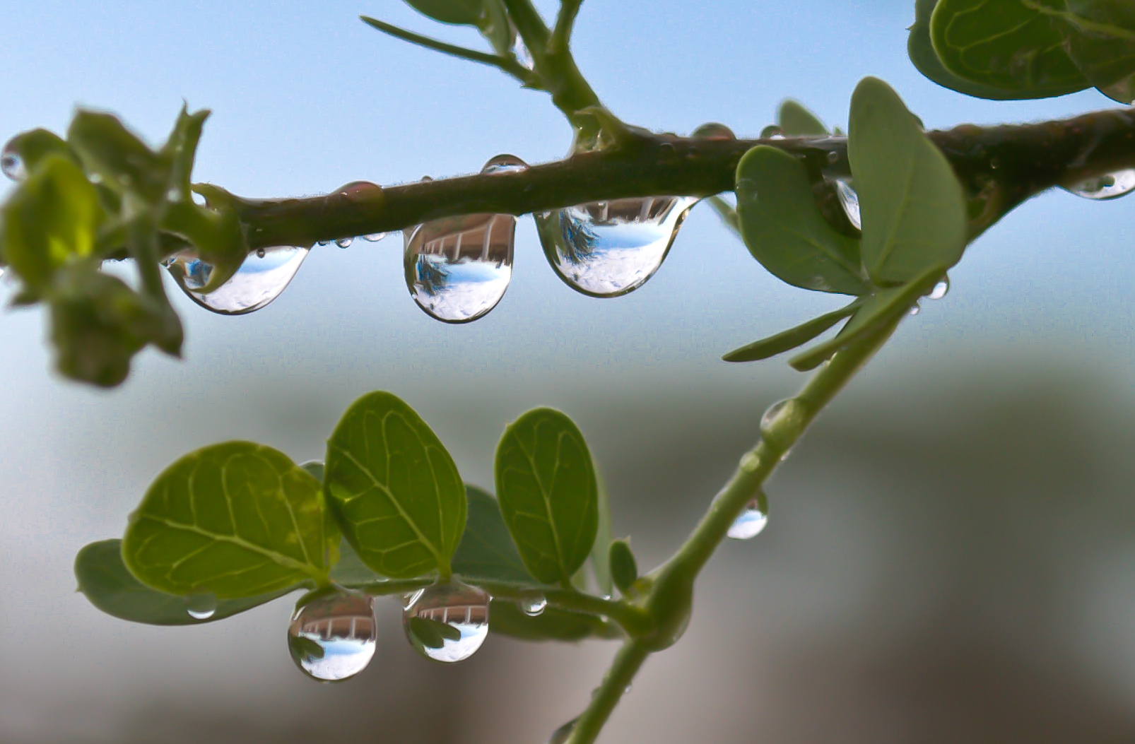 Droplets in the Morning.