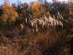 Drover Heide 1