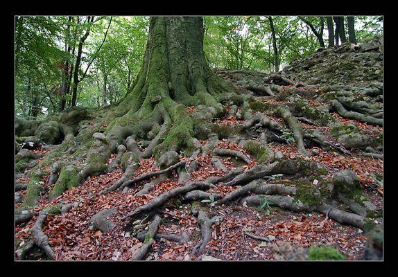 Druidenbaum
