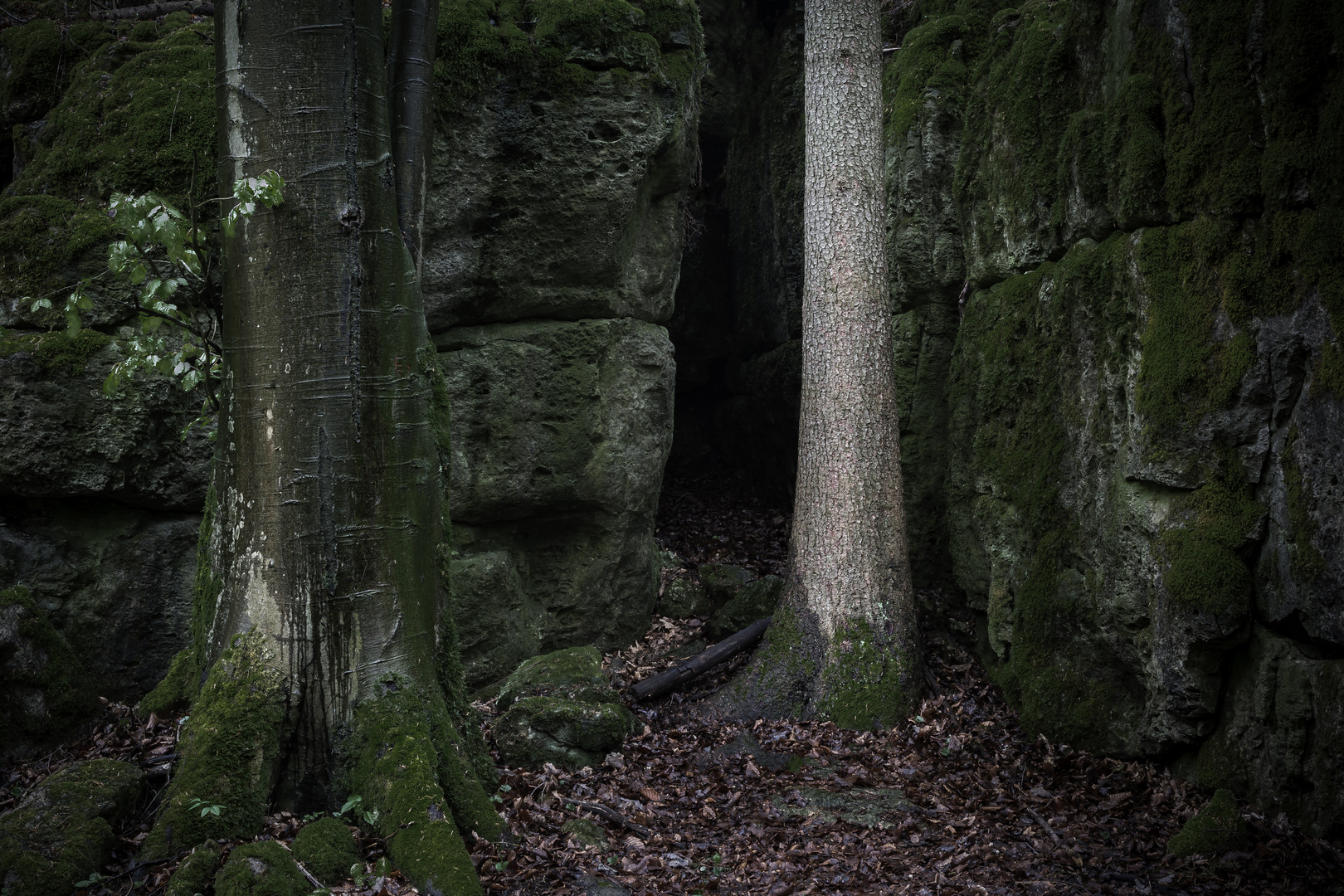 Druidenhain .