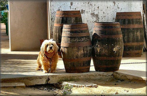 Drunk dog :-)))))
