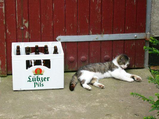 drunken cat :-)