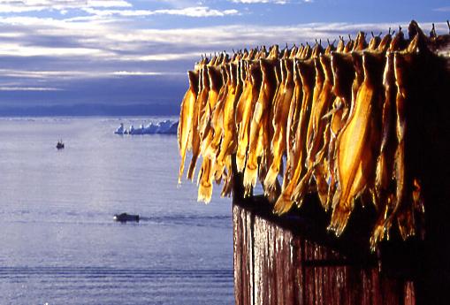 dry fish Disko bay
