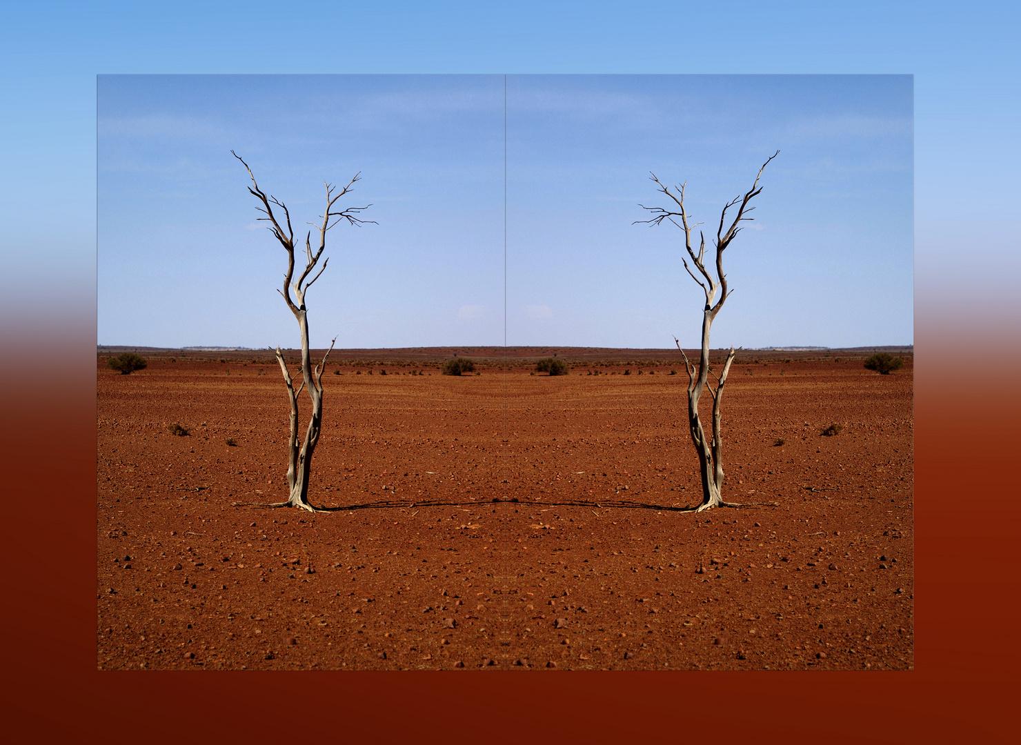 + Dry Land +