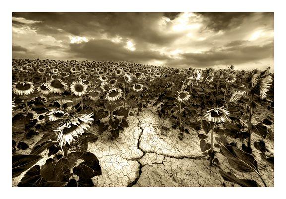 """Dryness"" di Antonio Morri"