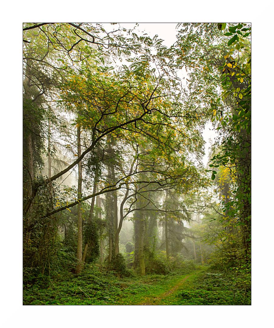 Dschungel am Schwanberg