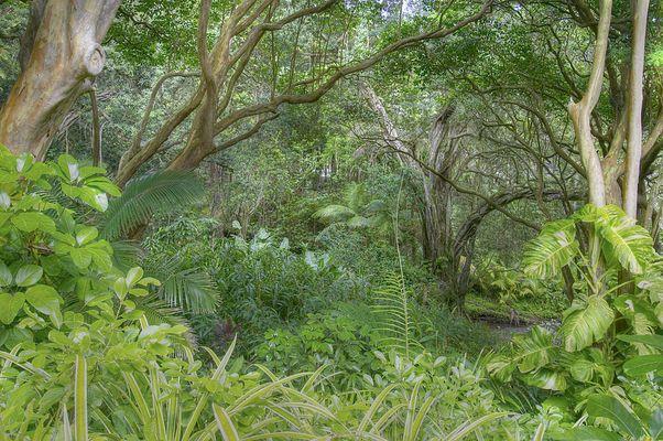 Dschungel auf Hawaii