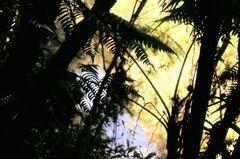 Dschungel Cuba
