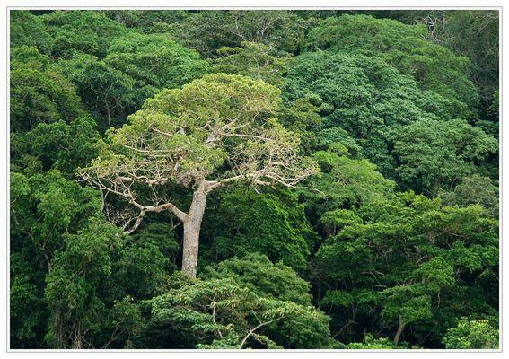 Dschungel....