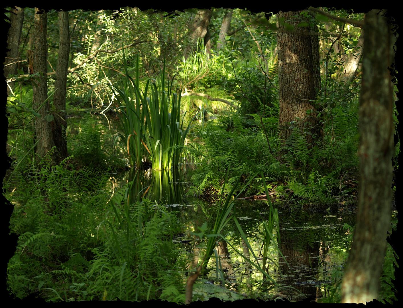 Dschungel in Deutschland