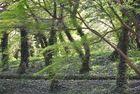 Dschungel in Kulturpark Oberlaa ?