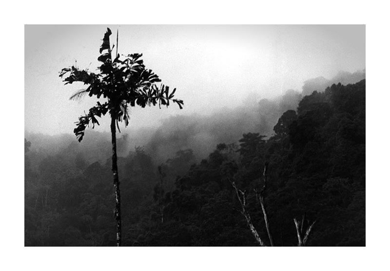... Dschungelnebel ...