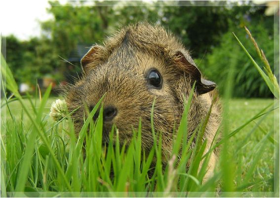 Dschungelschwein :)