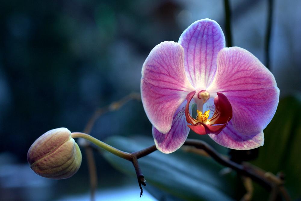 Du bist für mich eine schöne Blume!
