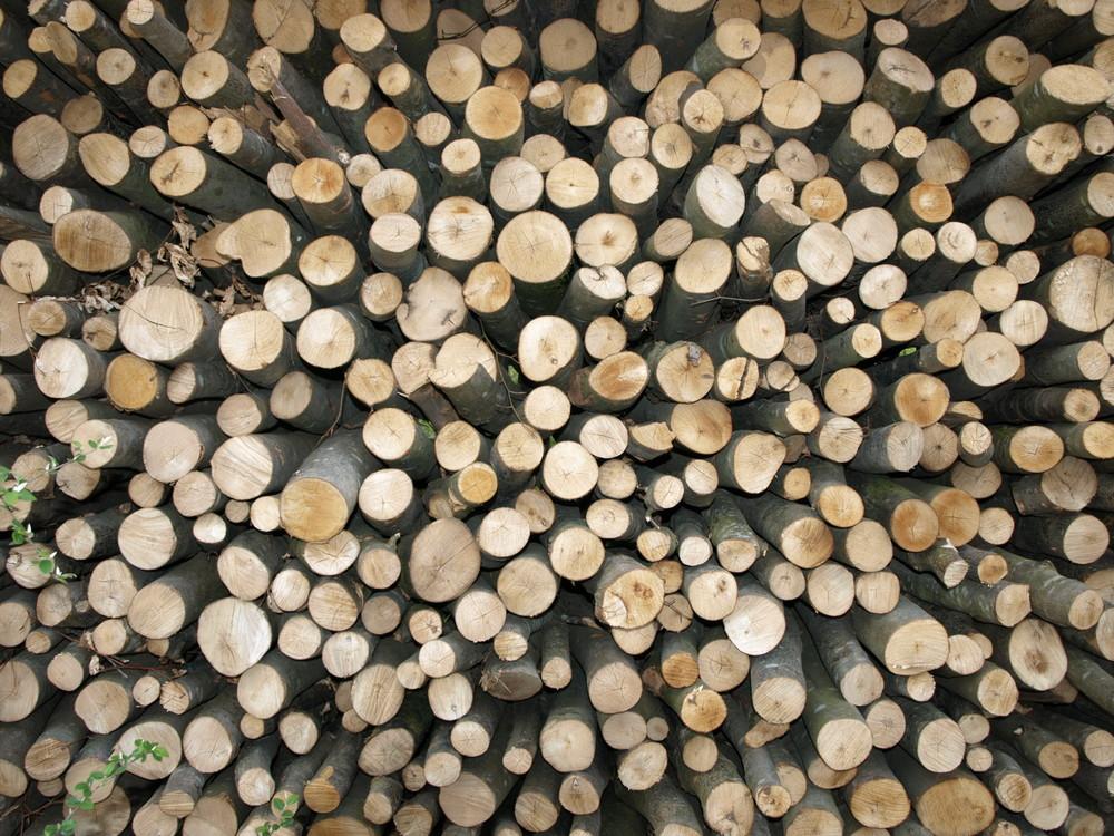 Du bois, du bois et encore du bois...