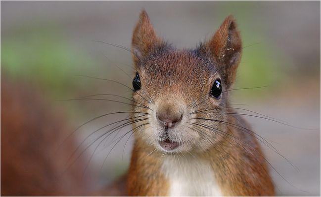 Du hast wirklich keine Nüsse?????