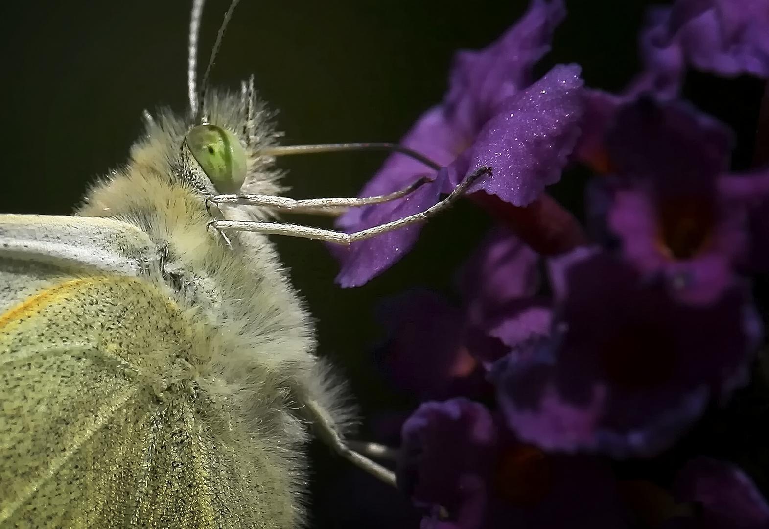...Du musst die Raupe erdulden, willst Du den Schmetterling kennen lernen...