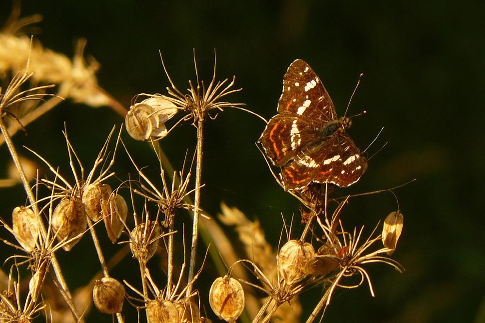 du naturaliste à l'imaginaire