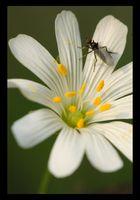 Du pollen plein les pattes...