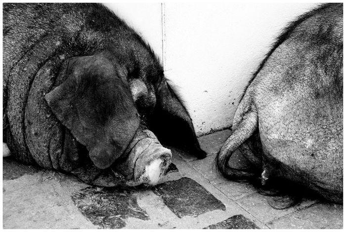 Du Schwein :-))