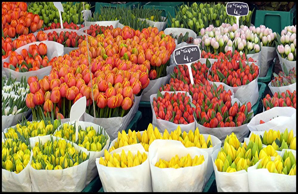 Du wolle Tulpen kaufen?