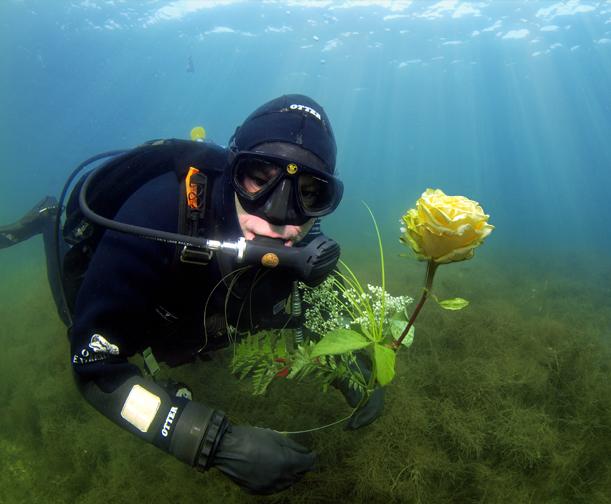 Du wollen Rose kaufen.....der Rosenkavalier zum Valentinstag!