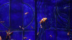 Dubai Aquarium Nemos