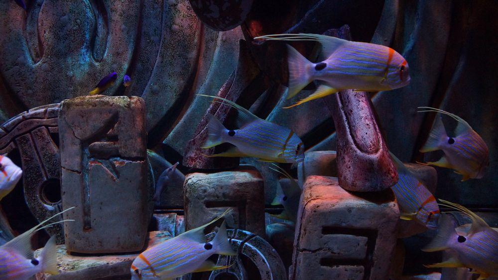 Dubai Atlantis Aquarium